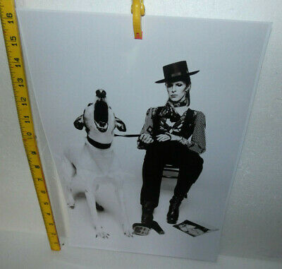 Large Photo David Bowie Sitting With A Dog  (ref D) • 3£