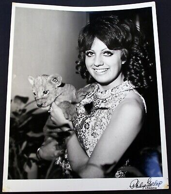Deep Purple Episode Six Photo Sheila Carter With MGM Lion By Philip Gotlop 1968 • 75£